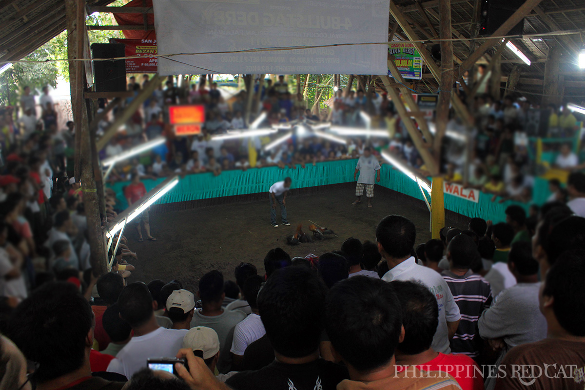 Philippines Cock Fighting