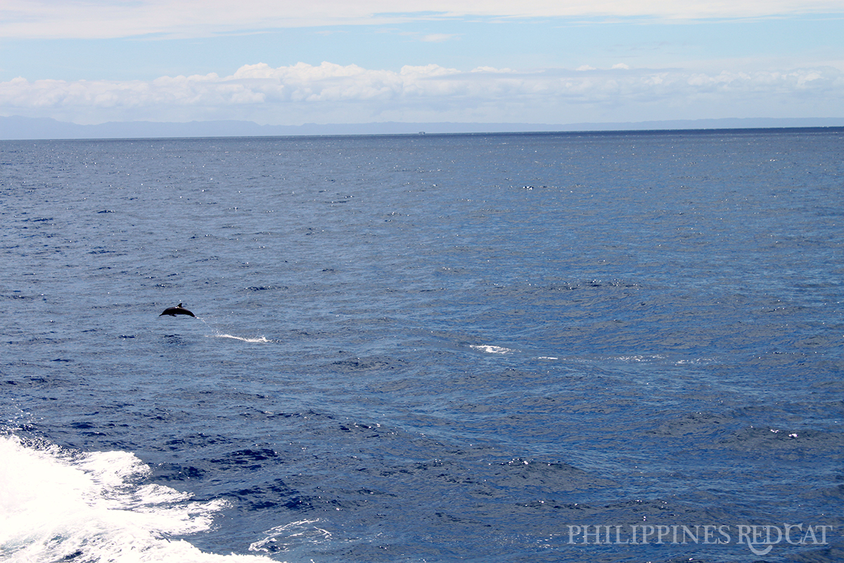 Philippines Dolphin
